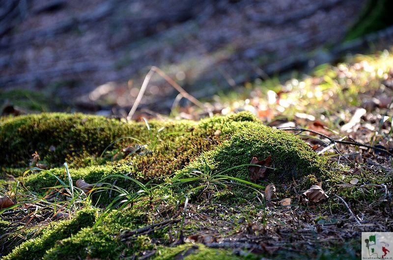 Flora del parco Adamello-Brenta