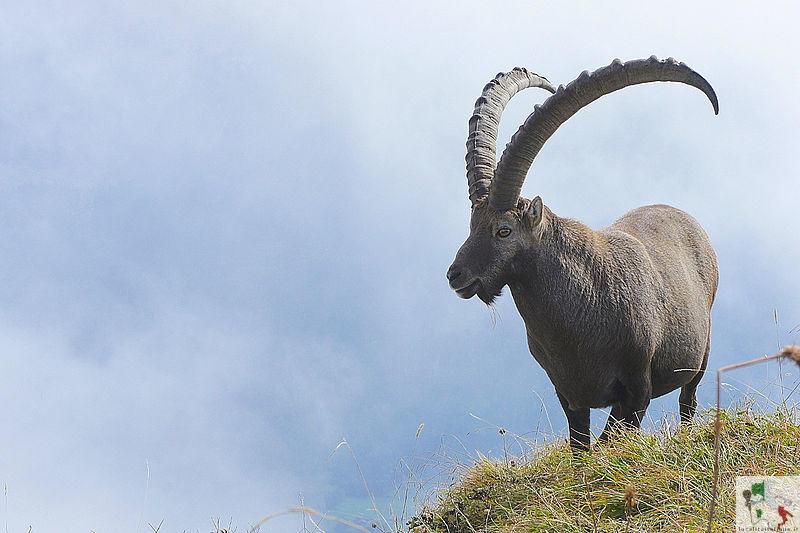 fauna del parco Adamello-Brenta