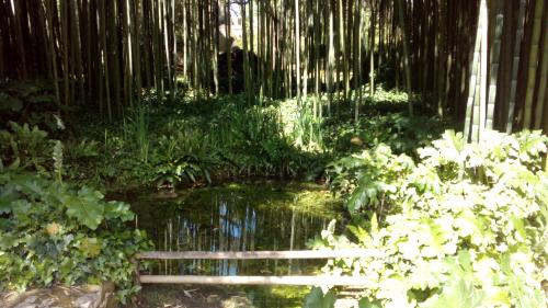 giardini di ninfa - stagno