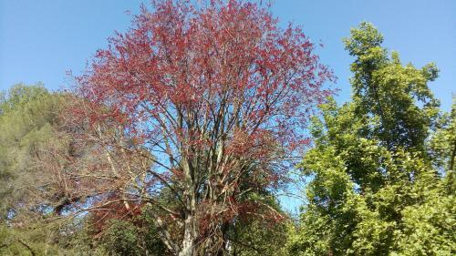 giardini di ninfa - albero