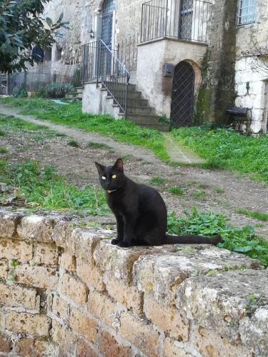 calcata-gatto-nero