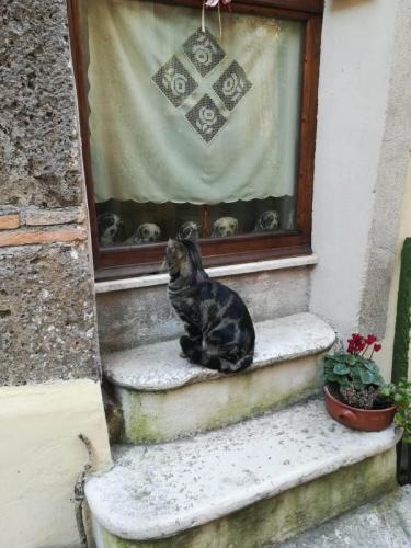 calcata-gatto