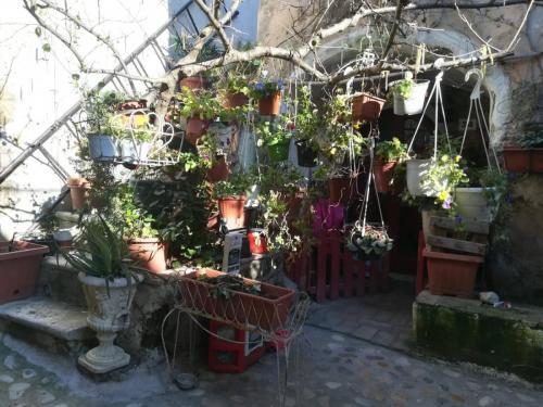 calcata-piante