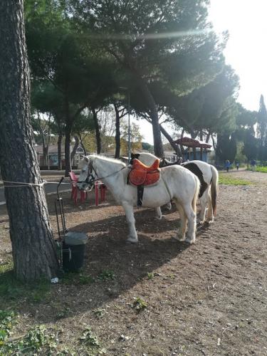 passeggiata a cavallo parco acquedotti