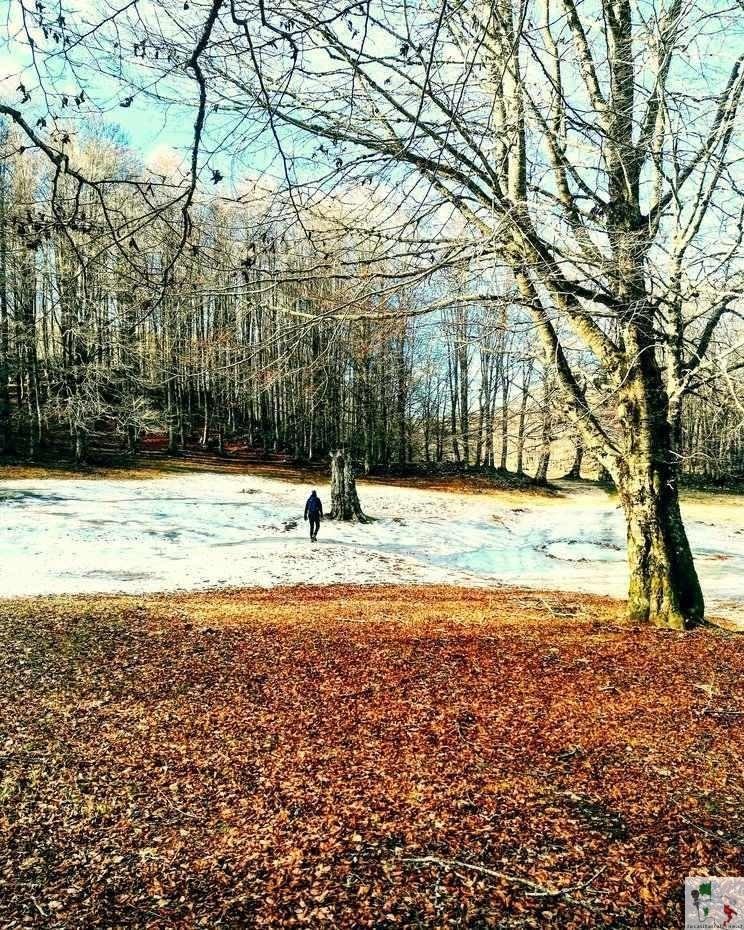 Campo dell'Osso boschi