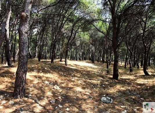 sentiero della parco di Porto selvaggio