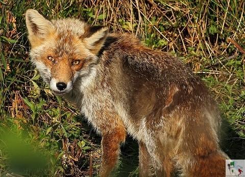 fauna della riserva